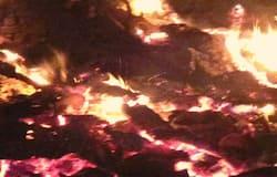 Cows dead fire