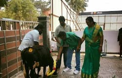 2 cows theft from vijayakanth house