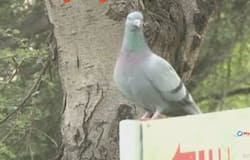 sultanpur sanctuary siberian bird illegal construction gurugram