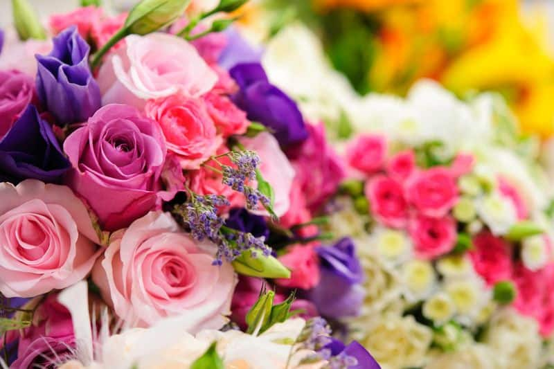 Different roses have different meanings. First, know exactly what do you want this Valentine's Day and express the right feelings. Here is what 14  colours of roses mean.