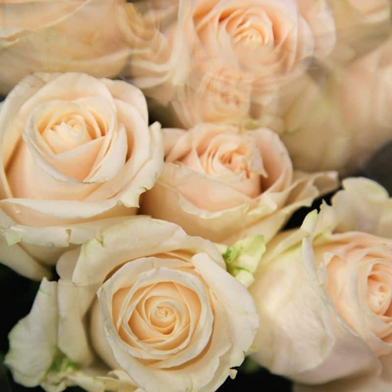 Cream Roses: Charm and Thoughtfulness