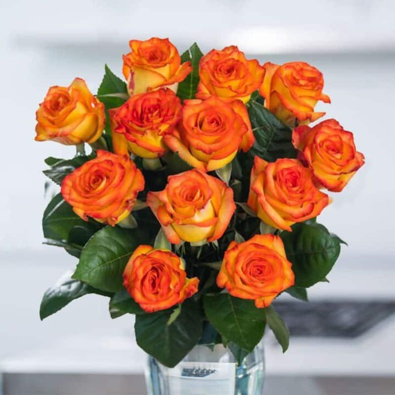 Orange Roses: Fascination