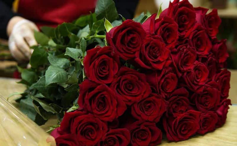 Red Roses: Love