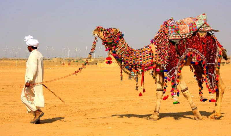 RAJASTHAN: The state animal of Rajasthan, camel, has more teeth than you (34, to be precise) and can go 5-7 days with little or no food and water. Though you may see them quite often camels have been declared as an endangered species by IUCN.
