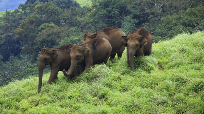 BR HILLS - The Biligirirangana Hills, commonly called BR Hills, is a hill range situated in south-eastern Karnataka, at its border with Tamil Nadu in South India. The area is called Biligiriranganatha Swamy Temple Wildlife Sanctuary or simply BRT Wildlife Sanctuary.