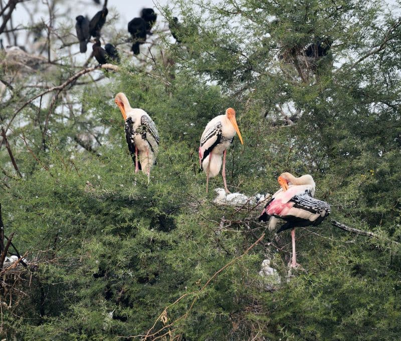 Keoladeo Ghana National Park, Rajasthan: Also known as the Bharatpur bird sanctuary is a must-visit place in every birdwatcher's itinerary. The national park provides habitat to many rare and endangered species which earns it a spot in the UNESCO list.