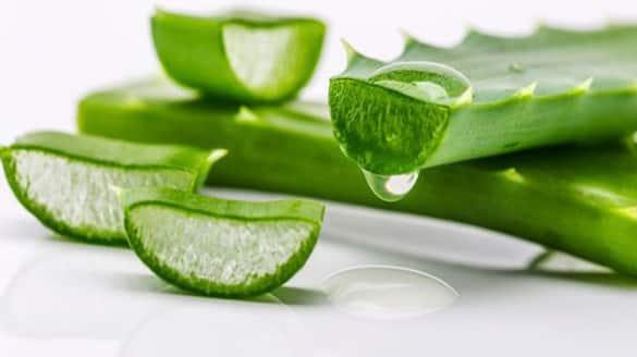 aloe vera gel for glow and healthy skin
