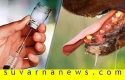 Anti Rabies