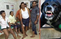 Dog attacks continue MyNation
