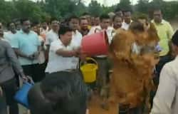 Congress MLA throws mud on government engineer in Maharashtra