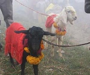 Tripura High Court bans animal sacrifice in all Tripura temples
