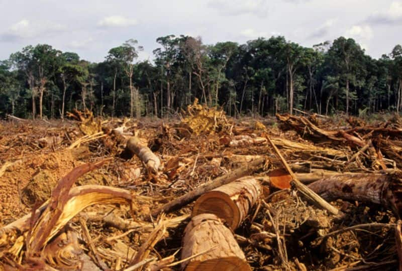 Due to deforestation, it is said that we are making more than 137 species extinct every day. Also, around 30% of our carbon emissions come from burning the Amazon rainforest.