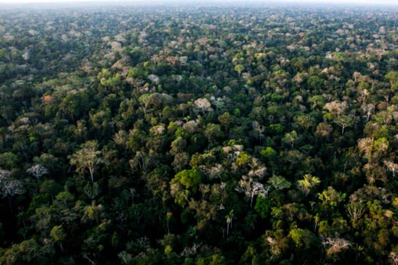 The Amazon trees block most of the sunlight; therefore, the floor of the forest is entirely dark. Only 1% of the light makes it to the floor.
