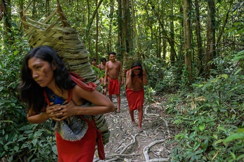 There are about 50 native tribes with their own language and culture living in the Amazon rainforest.
