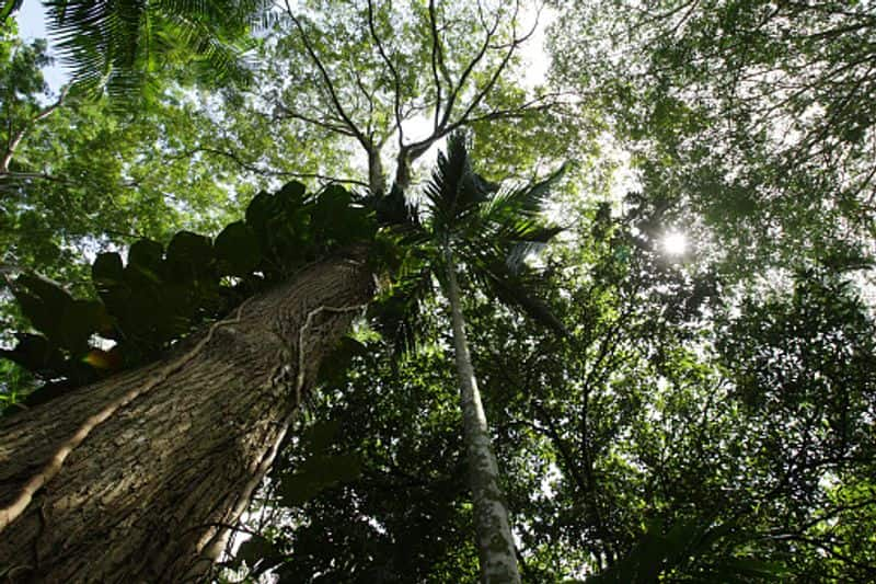 The Amazon rainforest contains more than 3,000 fruits. Only 200 of these are consumed in the western world.
