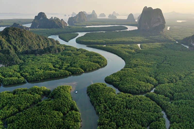The Amazon forest is the world's largest rainforest and it plays a crucial role in keeping our planet's carbon-dioxide levels in check. This is one of the reasons that the Amazon is often referred to as the 'lungs of our planet'.  Here are 11 facts  about the Amazon rainforest