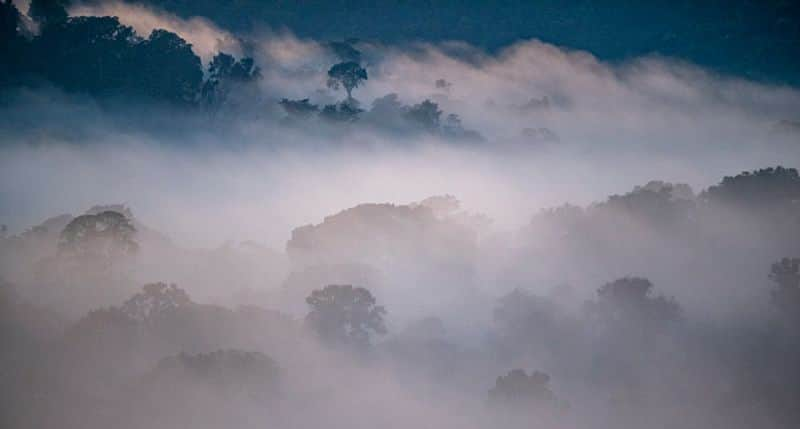 The Amazon is found in South America, spanning across Brazil, Bolivia, Peru, Ecuador, Colombia, Venezuela, Guyana, Suriname and French Guiana. Nearly two-thirds of the Amazon rainforest is found in Brazil.