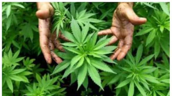 man gifted a ganja packet to women over not accepting his love, arrested after 3 years