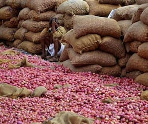 Government bans export of onions with immediate effect, hopes to curb price rise