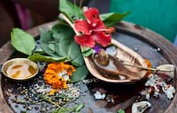 যে কোনও পুজোয় বেল পাতা কেন অপরিহার্য উপাদান, জেনে নিন এর গুরুত্ব