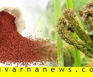 Minimum Support Price of ragi fixed in kolar