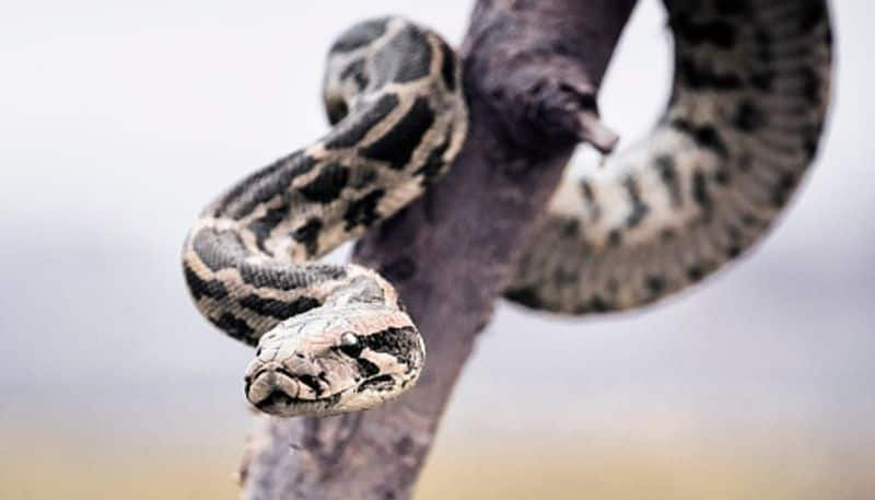 Snake lovers seek the intervention of CM to make anti venom in Bengal