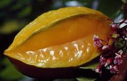 পরিচিত এই ফলের গুনাগুণ অনেক, ফল থেকে বাকল সবই ঔষধিগুণ সম্পন্ন