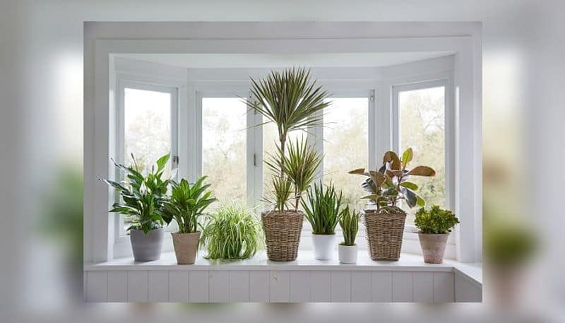 new trends of home decor on the indoor plant