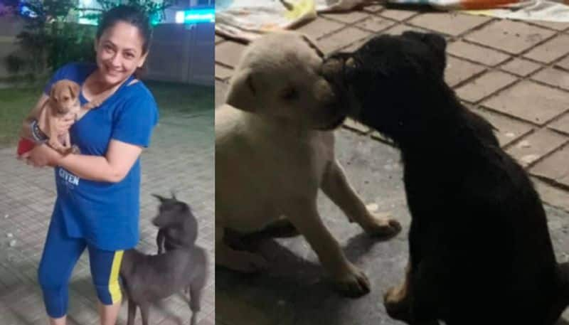 Sreelekha Mitra faced problem after rescue three street dogs