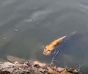 Fish with human like face spotted in China goes viral
