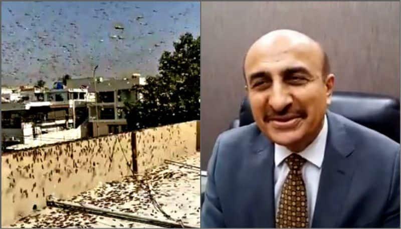 locust attack in Karachi, Pakistan minister says make its biryani