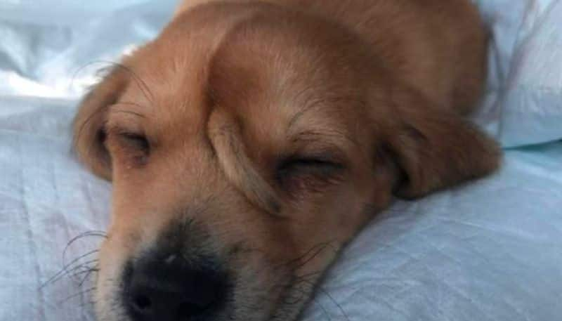 The puppy was found with a small tail growing out of its forehead in America