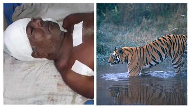Fisherman rescued from tiger attack in Sunderbans