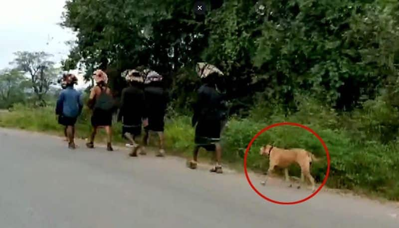 A picture of stray dog joined the barefoot Sabarimala devotees goes viral