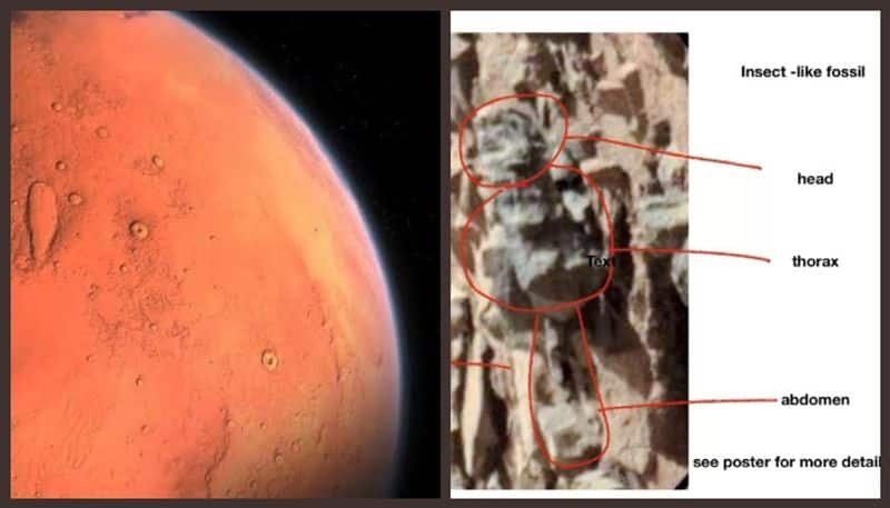 Scientist claims to spot insects on Mars but I think theyre just rocks