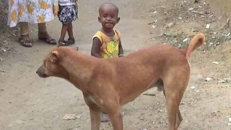 Emotional story of a brave dog and a girl, Korba News