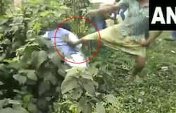 manhandled and kicked allegedly by TMC workers