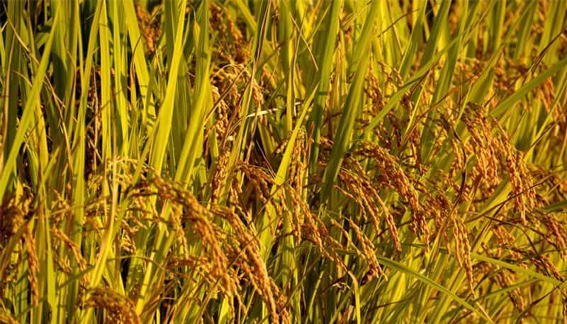 BJP government hands over farmers' farming scheme Pa. Chidambaram Flow. !!