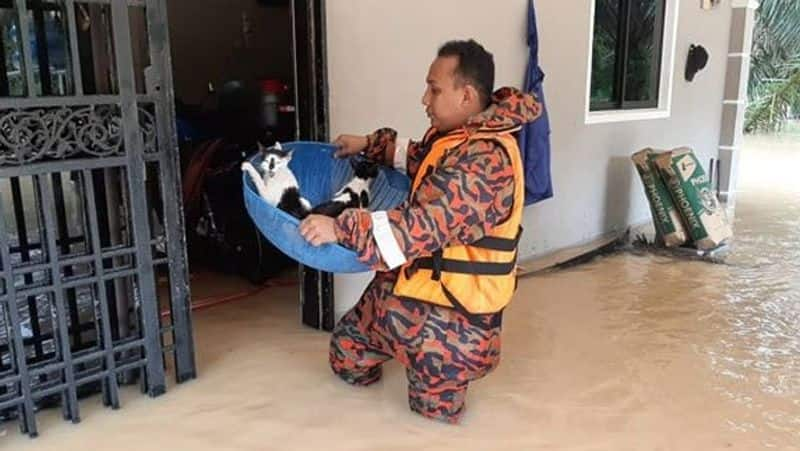 Heart touching photos of rescue team saving animals during flood in Malaysia kph