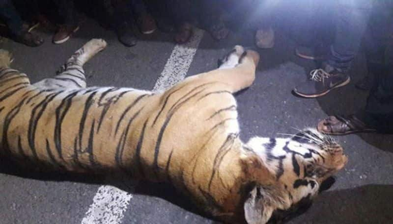 A pregnant tigress dies in Uttarakhand after being hit by the speeding vehicle