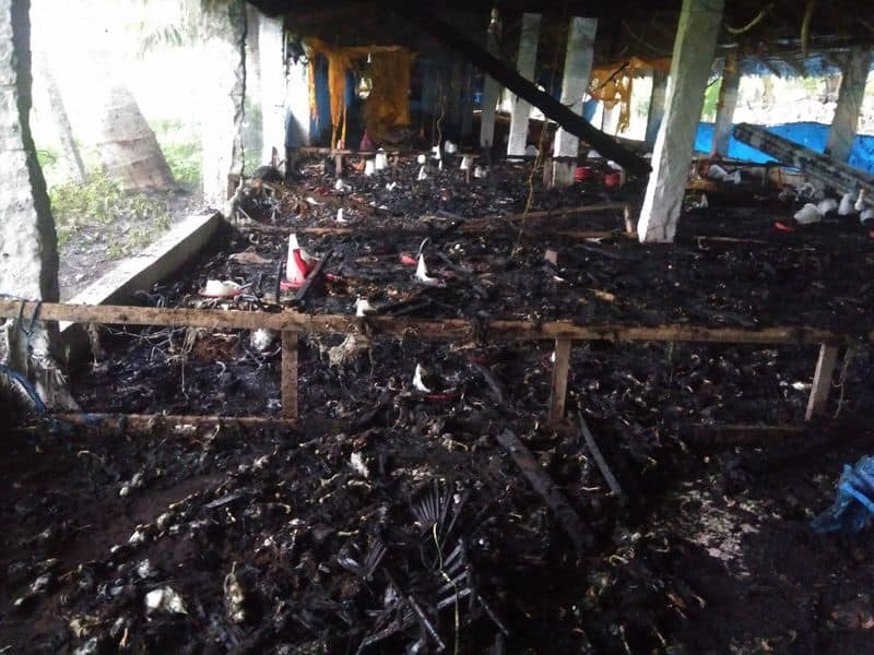 4000 hens died in fire accident