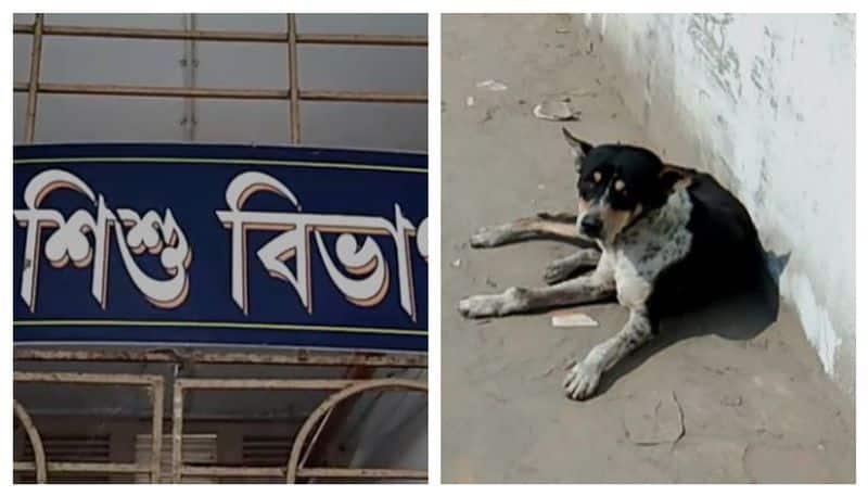 Street dog saves a new born girl child in Basirhat
