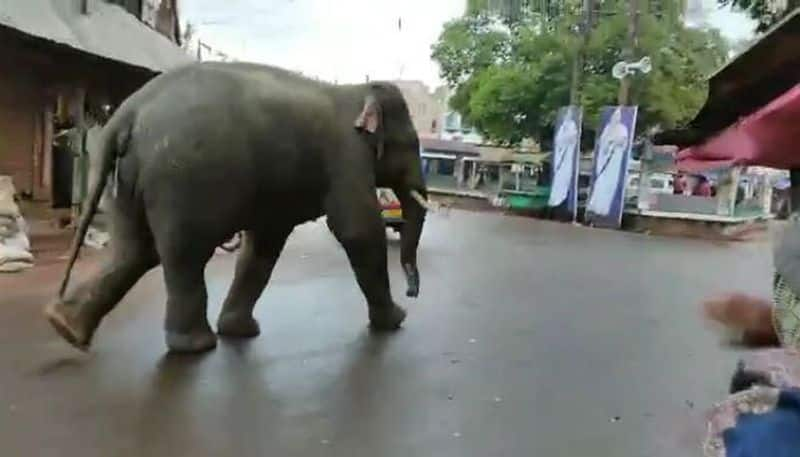 An elephants drink wine in Midnapore village creates panic among the locals