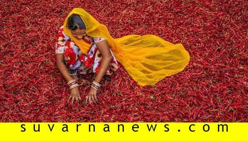 Haryana Based Merchants Cheat to Chilly Merchant in Byadagi in Haveri District