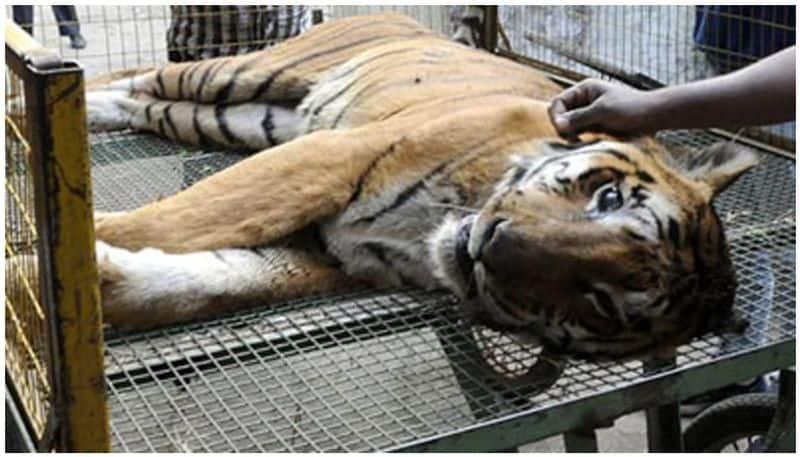 Centre sends advisory to nabanna regarding zoo animals