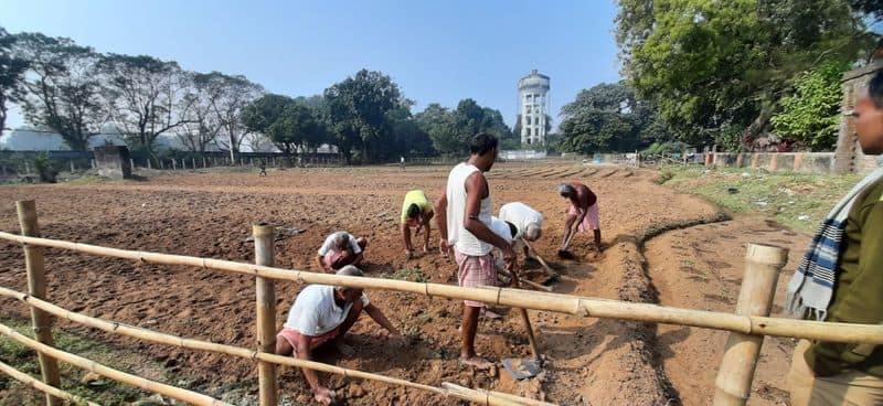 Prisoners of Midnapore jail are harvesting herb