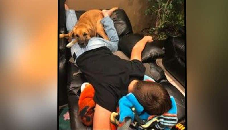 Family of 13-Year-Old Boy With Stage 4 Cancer Asks For Help Finding Lost Dog, Xena