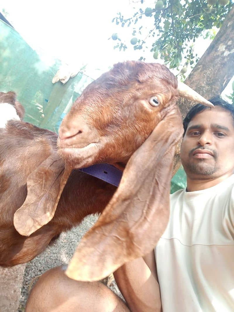 Learn the techniques of organized goat farming from Rajiv