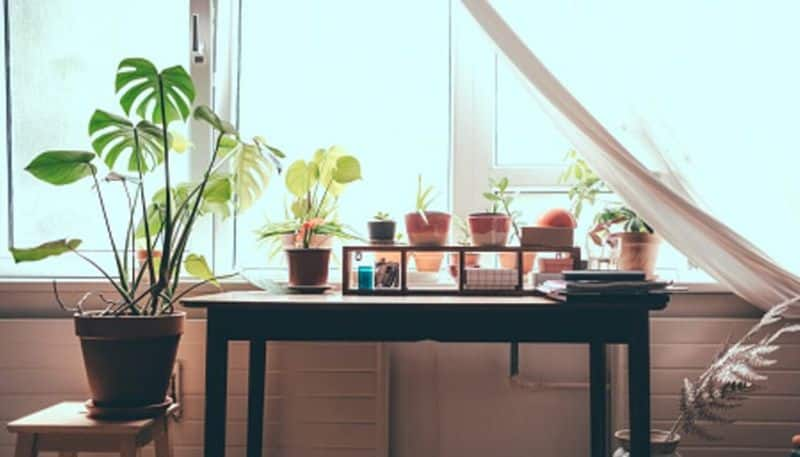 Five easy indoor plants that can change your home