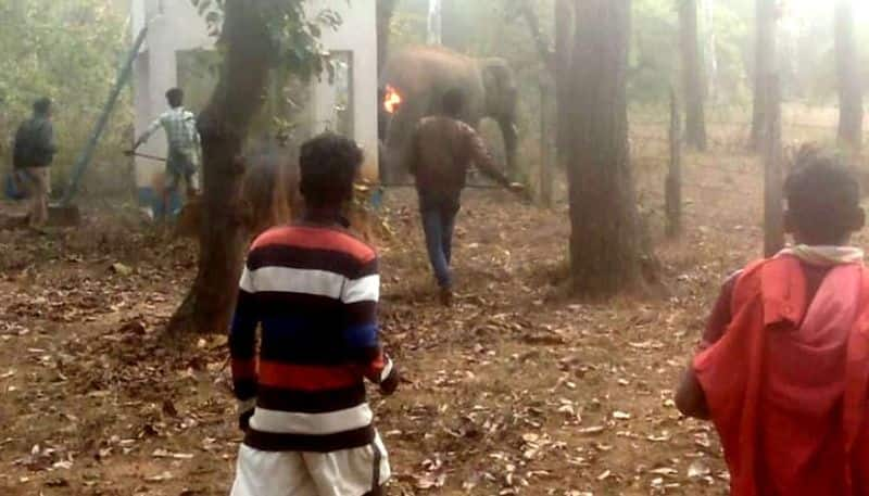 Forest officials have taken steps to send elephant from midnapore